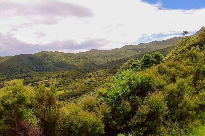 Great Barrier Island. Новая Зеландия-50 фото-