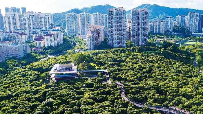 Ближе к природе: над китайским парком построили крутые пешеходные мосты-4 фото-