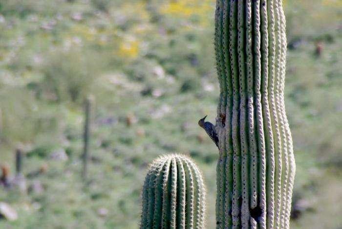 Кто живет в кактусе (10 фото)