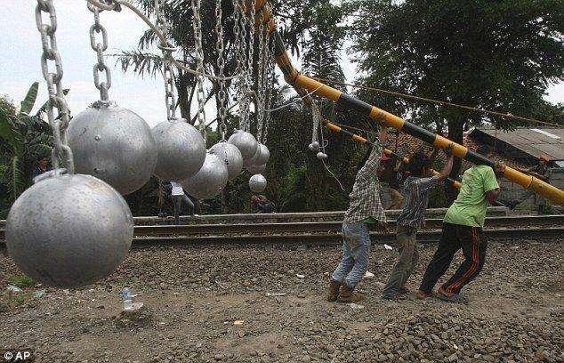 Борьба с зайцами в Индонезии (6 фото)