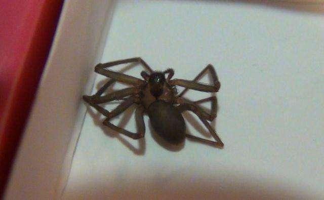 Последствия укуса паука (19 фото)