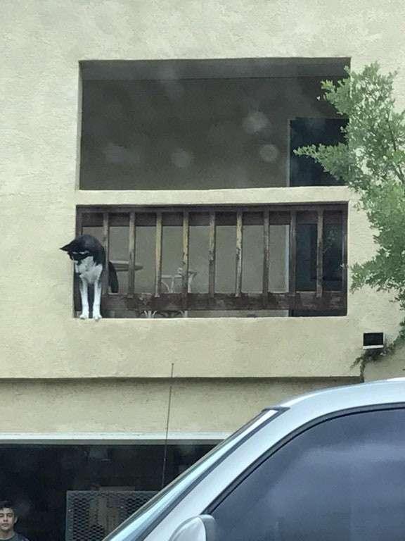 Что не так с моей собакой?-25 фото-