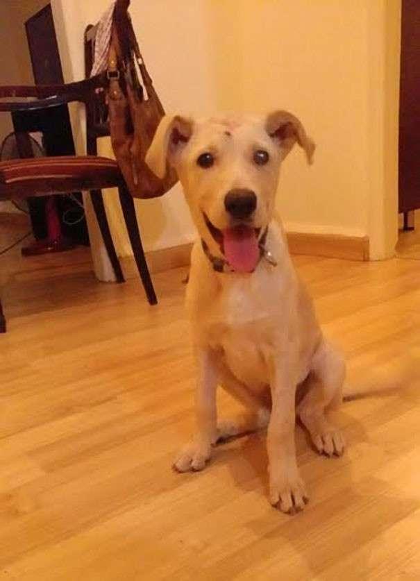 Этой бездомной собаке стреляли в голову десятки раз, но она продолжала бороться за свою жизнь-9 фото-