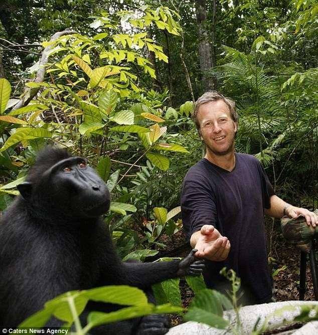 Как обезьянкино селфи сломало жизнь крутому фотографу-3 фото-