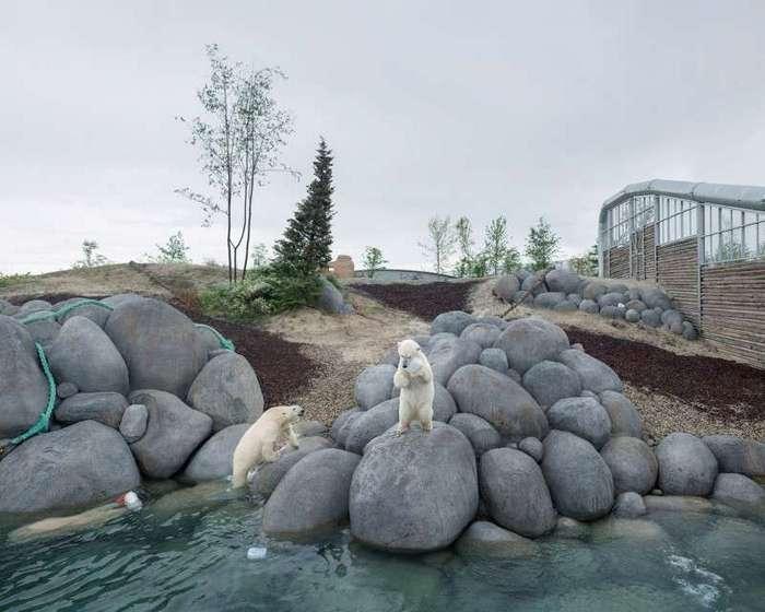 За решеткой: грустная жизнь белых медведей в неволе-15 фото-