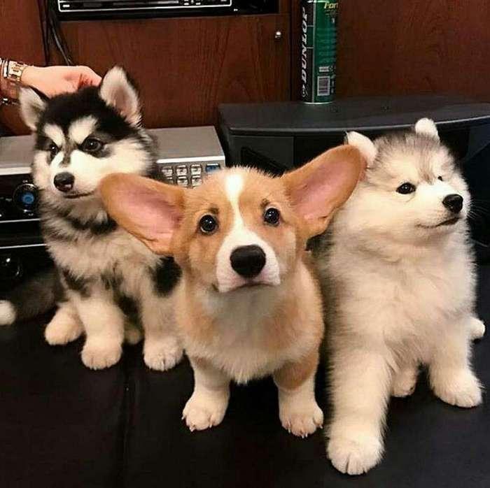 Подборка забавных собакенов-20 фото-