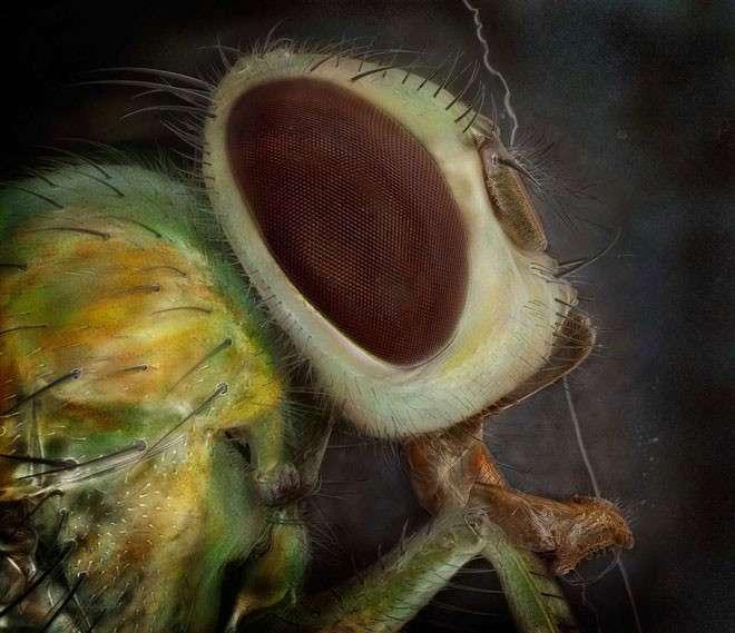 Невероятные снимки насекомых сделанные под микроскопом (15 фото)