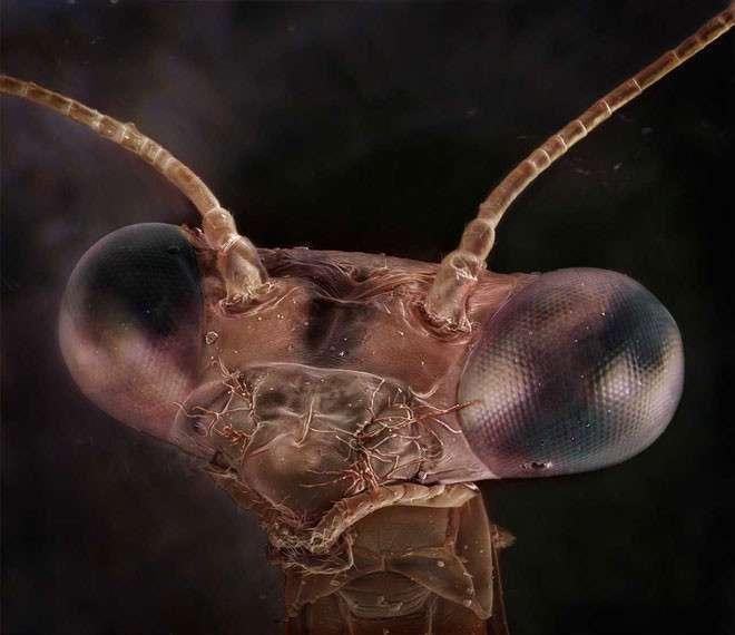 Невероятные снимки насекомых сделанные под микроскопом-15 фото-