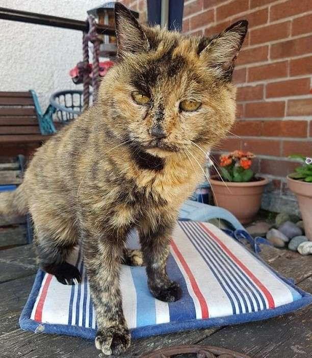 Старейшая кошка в мире успешно перенесла серьезную операцию и будет жить дальше-4 фото-