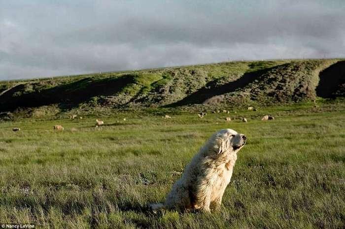 Фотохудожница делает портреты собак-пенсионеров-10 фото-