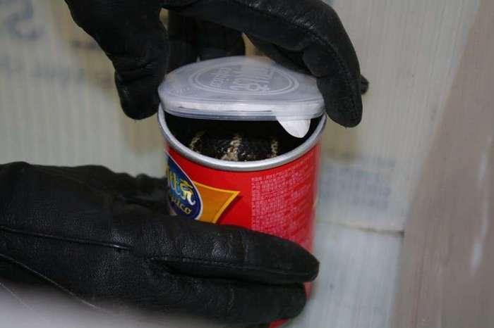 Посылки опасные для жизни: Американцу прислали ядовитых кобр в банках из-под чипсов-3 фото-