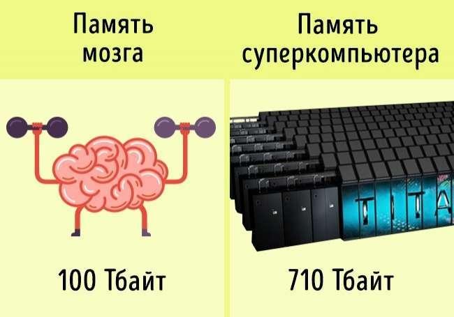 10доказательств того, что наш организм мощнее любого суперкомпьютера