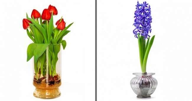 19цветов иовощей, которые можно вырастить ввазе сводой