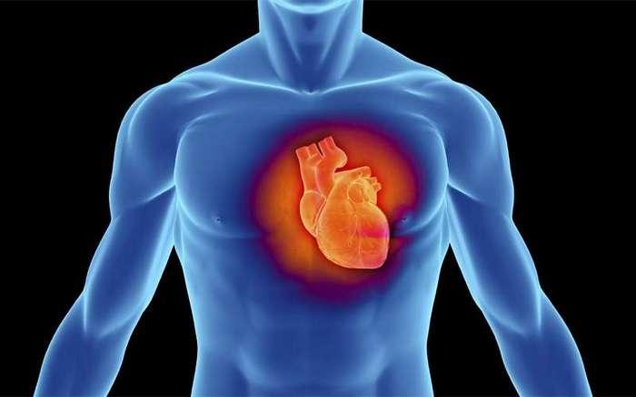 Как накачать сердечную мышцу