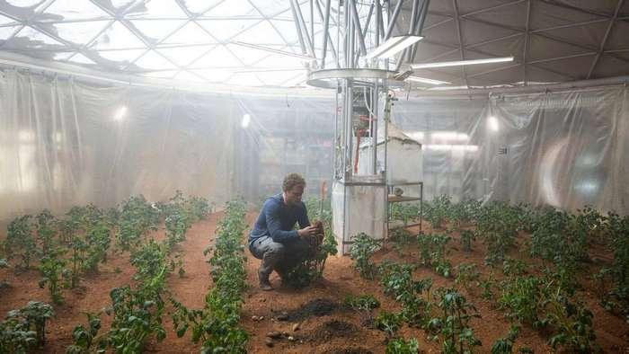 Лакомимся жареной картошечкой с планеты Марс!