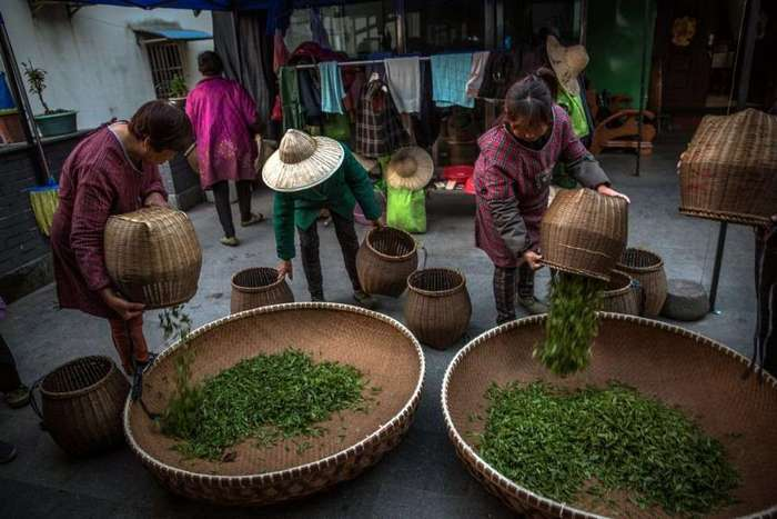 Где производят четвертую часть всего чая в мире