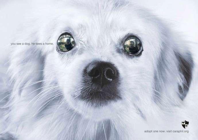 Очень мощная социальная реклама о животных