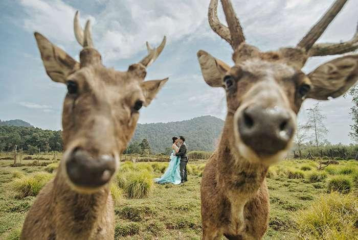 20 свадебных снимков, на которых что-то явно не так