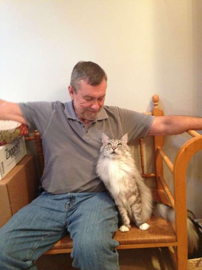 Эти кошки породы мейн-кун, украдут ваше сердце за секунду! (32 фото)
