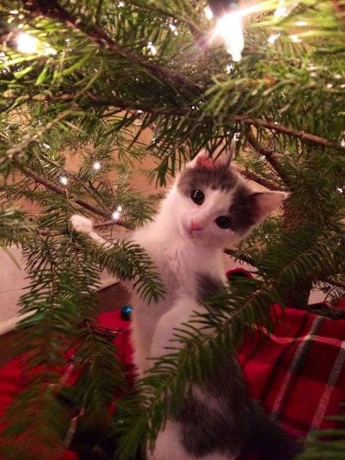 Смешные и забавные коты (41 фото)