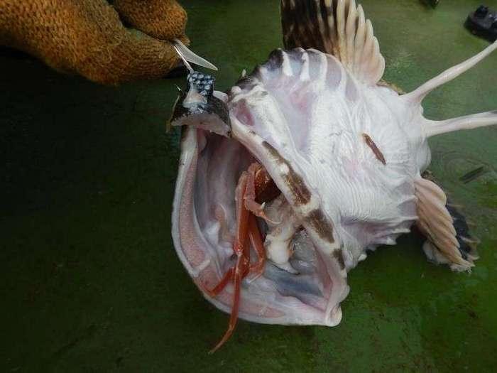 Морское меню колымского рыбака