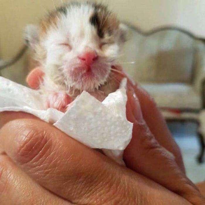 Спасая котёнка из мусорки, женщина и не представляла насколько он редкий! (6 фото)