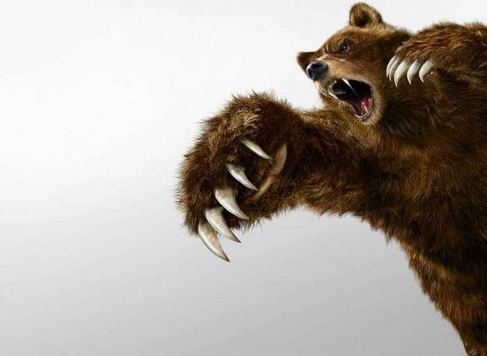 Интересная история: Про медведа и говно