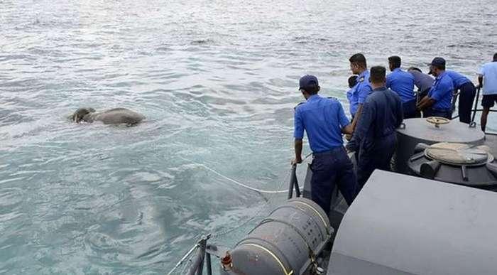 Слон в 16 км от берега