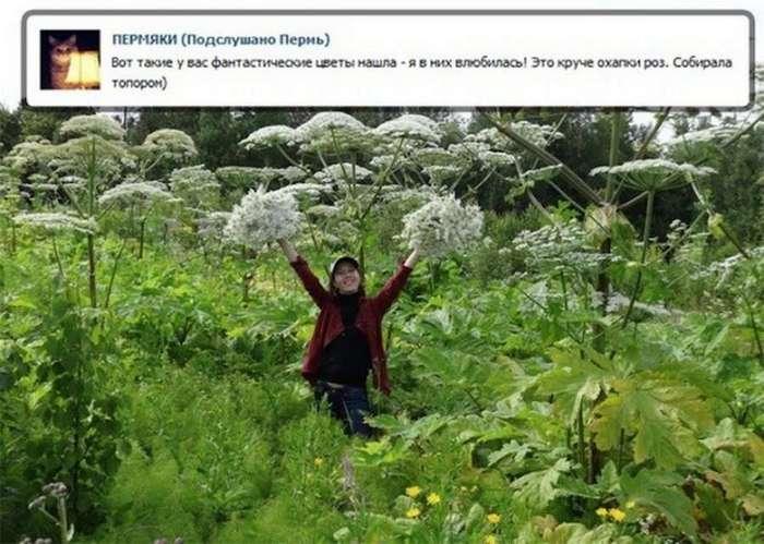 Борщевик победно шествует по России (13 фото)