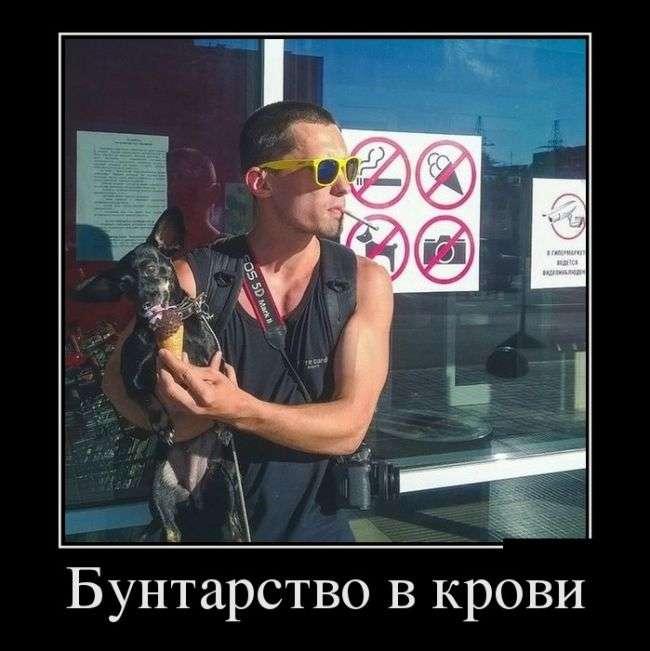 Демотиваторы - 963