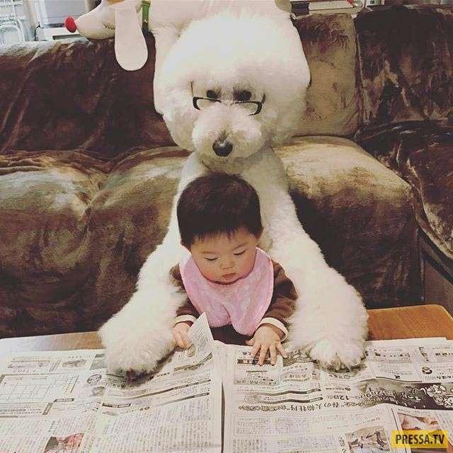 Настоящая дружба: маленькая японская девочка и огромный пудель (13 фото)