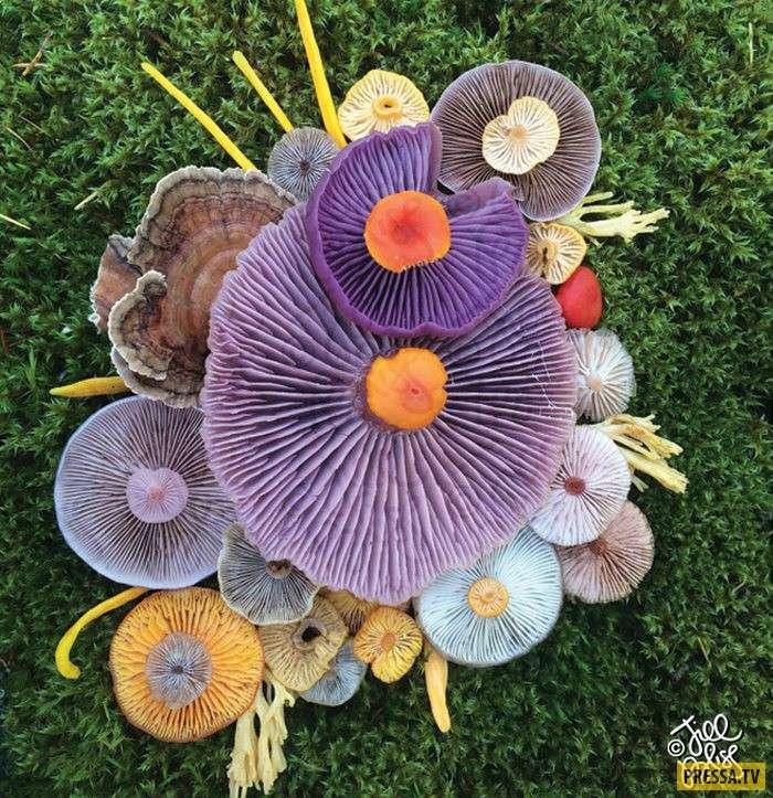 А Вы бы попробовали эти грибы? (10 фото)