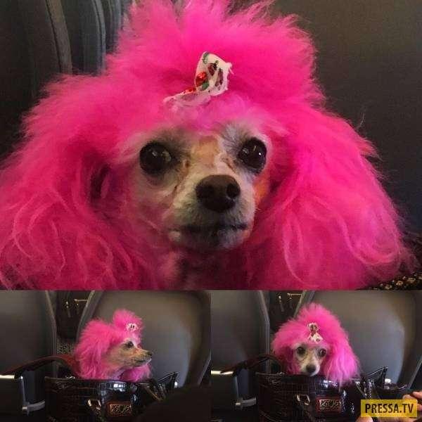 Забавные и позитивные животные (38 фото)