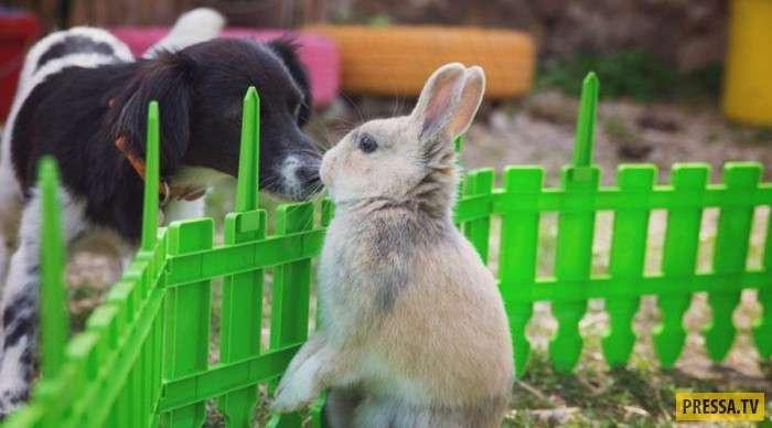 Животные, несовместимые друг с другом в домашних условиях (8 фото)