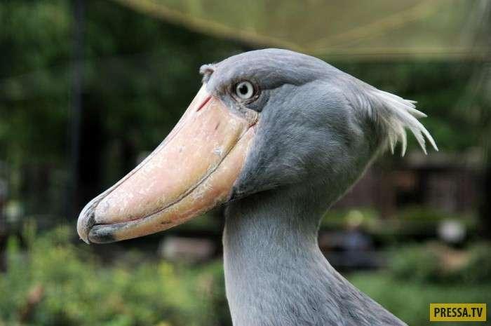 Топ 10: Вымирающие виды птиц и животных (11 фото)