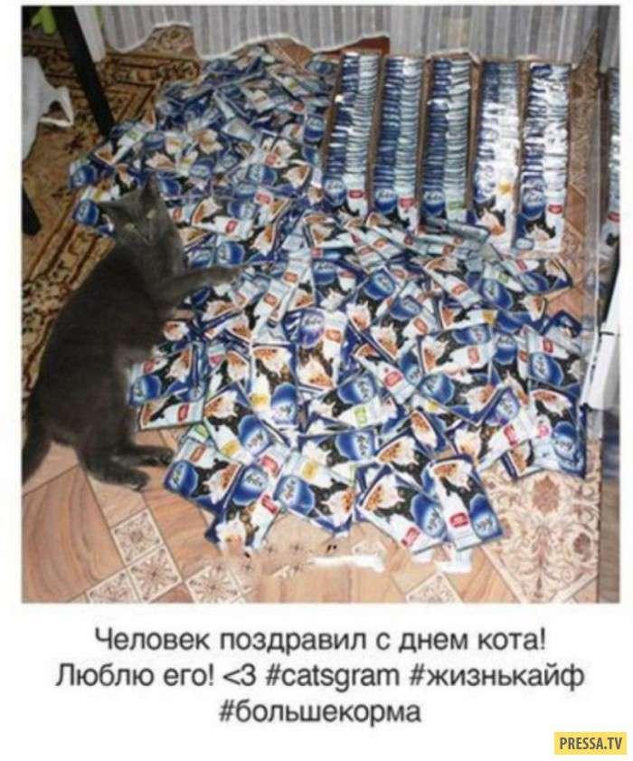 Мои котики ведут Инстаграм (7 фото)