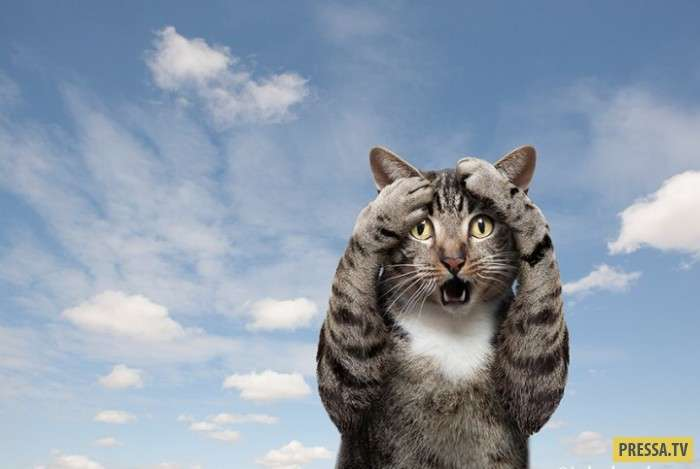 Запуск кота в стратосферу и другие приключения...