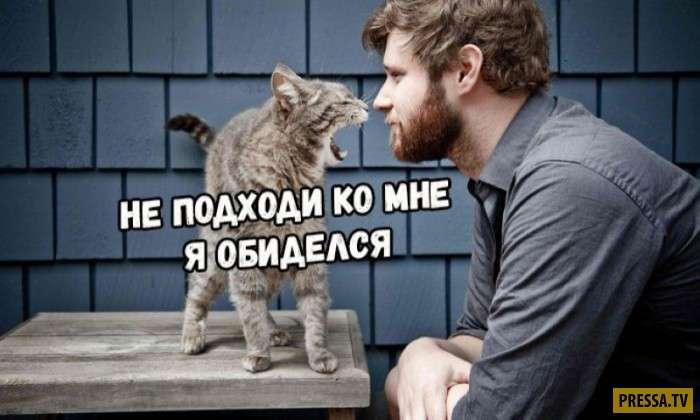 Коты капризничают, как девушки (6 фото)