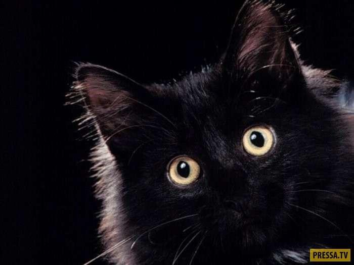 Брошенный котяра