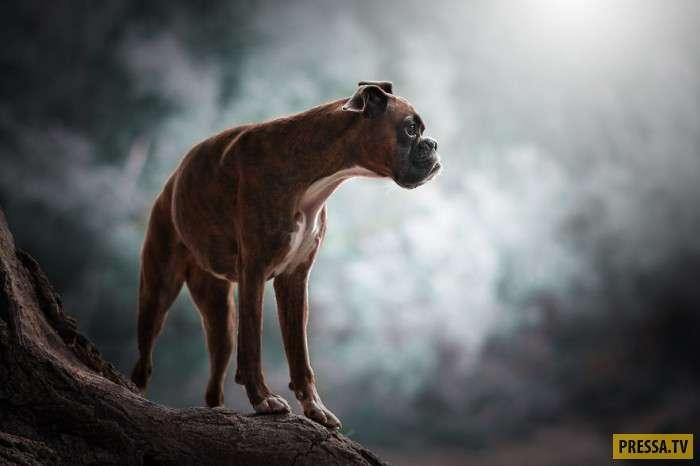 Вот, как нужно фотографировать собак (15 фото)