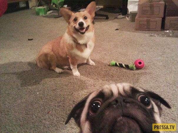 20 смешных животных, которые любят делать сэлфи! (20 фото)