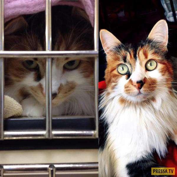 Как изменились кошки и собаки, после того как их забрали из приюта (32 фото)