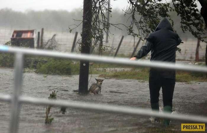 Фотограф спас пса во время наводнения в США (3 фото)