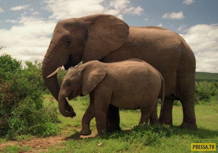 Самые дорогие животные нашей планеты (20 фото)