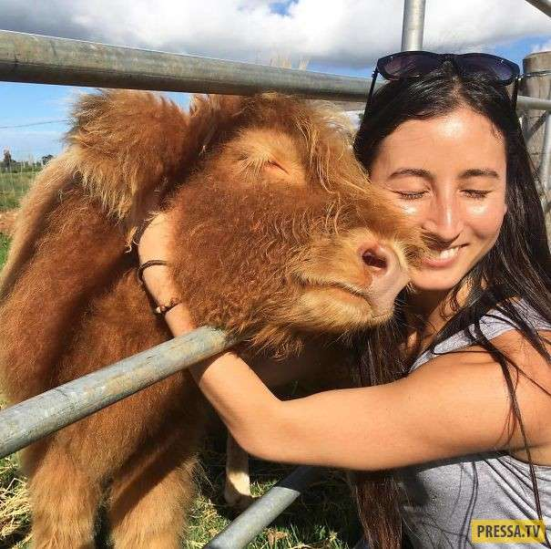 Корова – такой же друг человека, как собака! (25 фото)