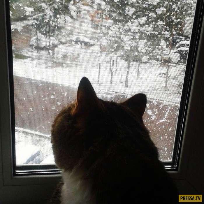 Зима ближе, чем кажется (7 фото)