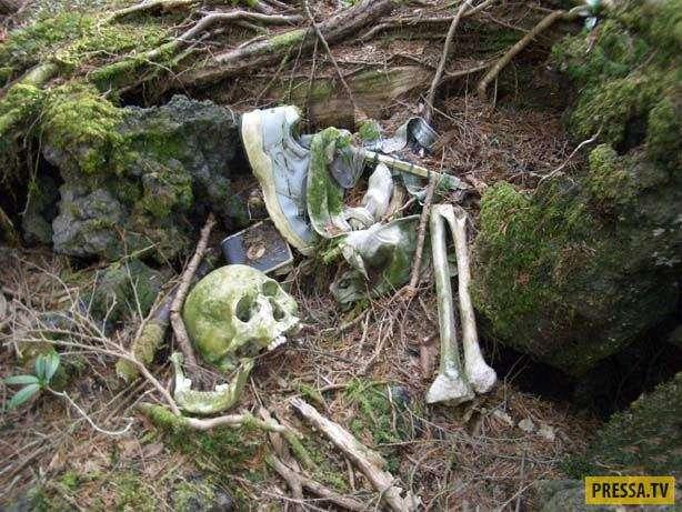 Самое страшное место на Земле – Лес самоубийц (14 фото)