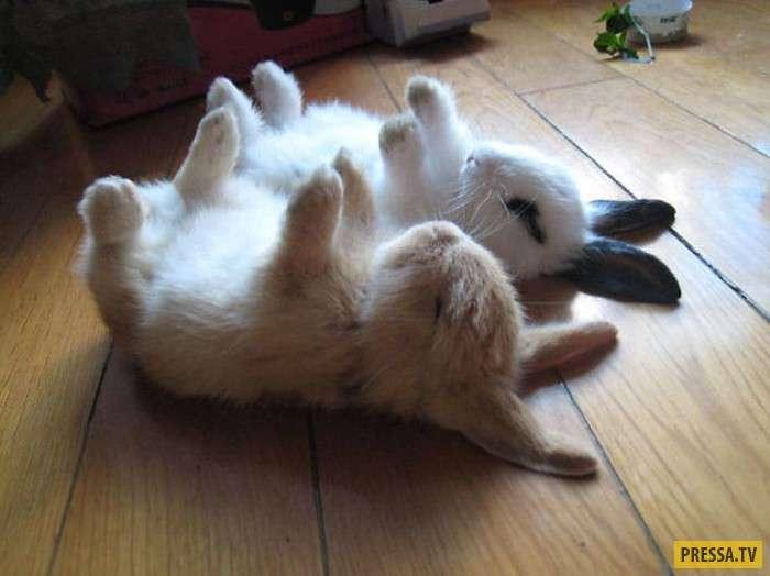 Вот как надо отдыхать! (20 фото)