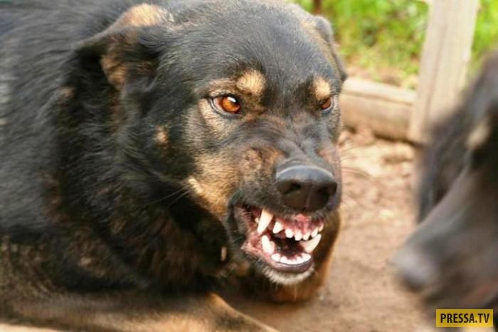 Что делать, если напала собака (5 фото)