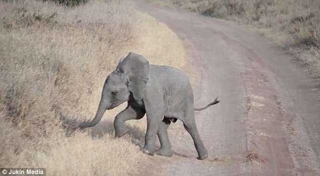 Уникальные кадры: неожиданный ответ слонихи на истерику слоненка